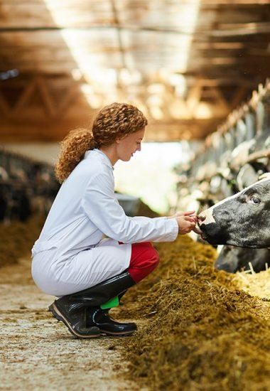 nutricion-alimentacion-animal
